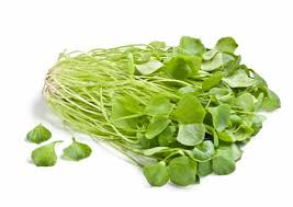safardia-gezonde voeding groente