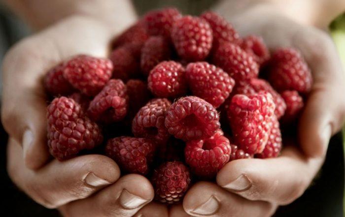 safardia post omgaan zacht fruit
